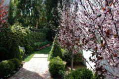 Plum Trees side garden